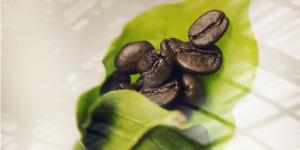Singular Coffee Sensation